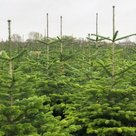 DEKA-tuin-Kerstbomen-van-eigen-land